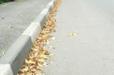 листва,_листья,_ж