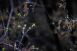 _весна,_цветение