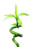бамбук,_природа,_