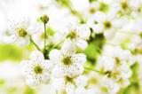 цветочный_фон,_ц�