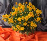 цветы,_ботаничес