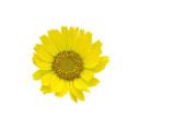 animal_and_flora,_flower,_autu