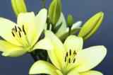 цветы,_цветок,_ра