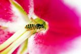 _цветок,_растени�