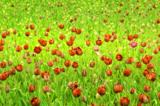 поле,_клумба,_цве