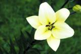 цветок,_растение