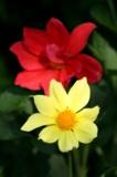 Дача,_лето,_цветы