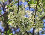 весна,_цветение,_