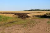 Пшеница,_поле,_ур