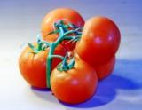 _помидор,_овощь,_