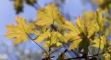 дерево,_листья,_л