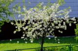 _весна,_цветение,