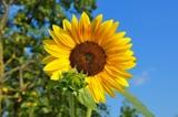 огород,_цветок,_л