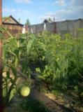 огород,_дача,_при