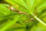 комар,_комары,_2,_�