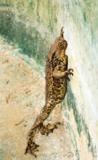 животное,_жаба,_л